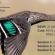 Birds_in_Flight_Blog